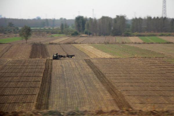 Kunden fotografieren: Reisfeld in China, Peking und Shanghai