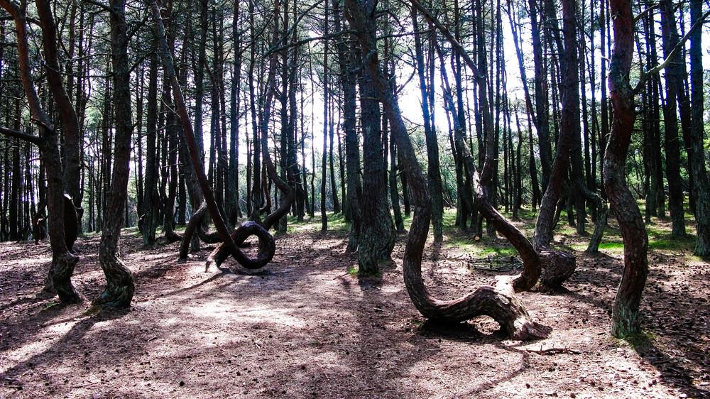 """""""Tanzenden Wald"""""""
