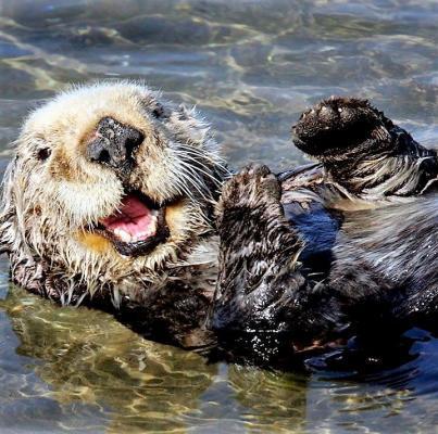 Otter in Kamtschatka