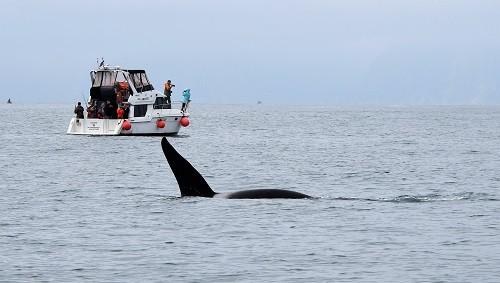 Orca, Schiff Kamchatka, Kamchatka, Reise Kamtschatka