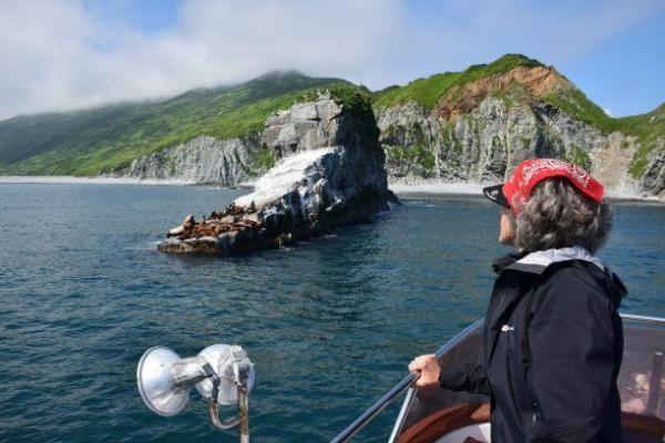 Seelöwen Russkaja Bucht, Kamtschatka